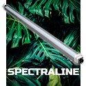 SpectraLINE