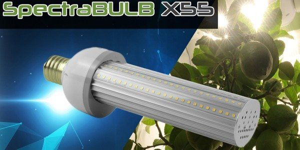 SpectraBULB X55 - The Horticultural LED bulb from BloomLED